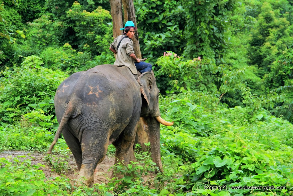 Pho Kyar Elephant Camp