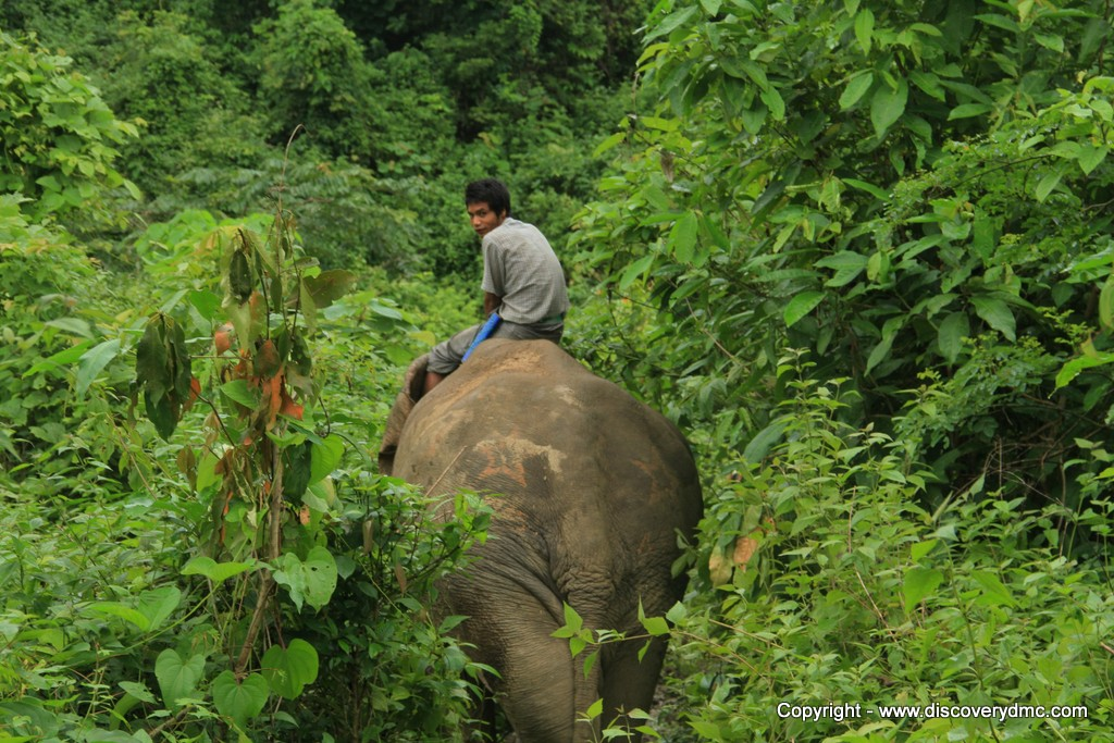 Pho Kyar elephant in jungle