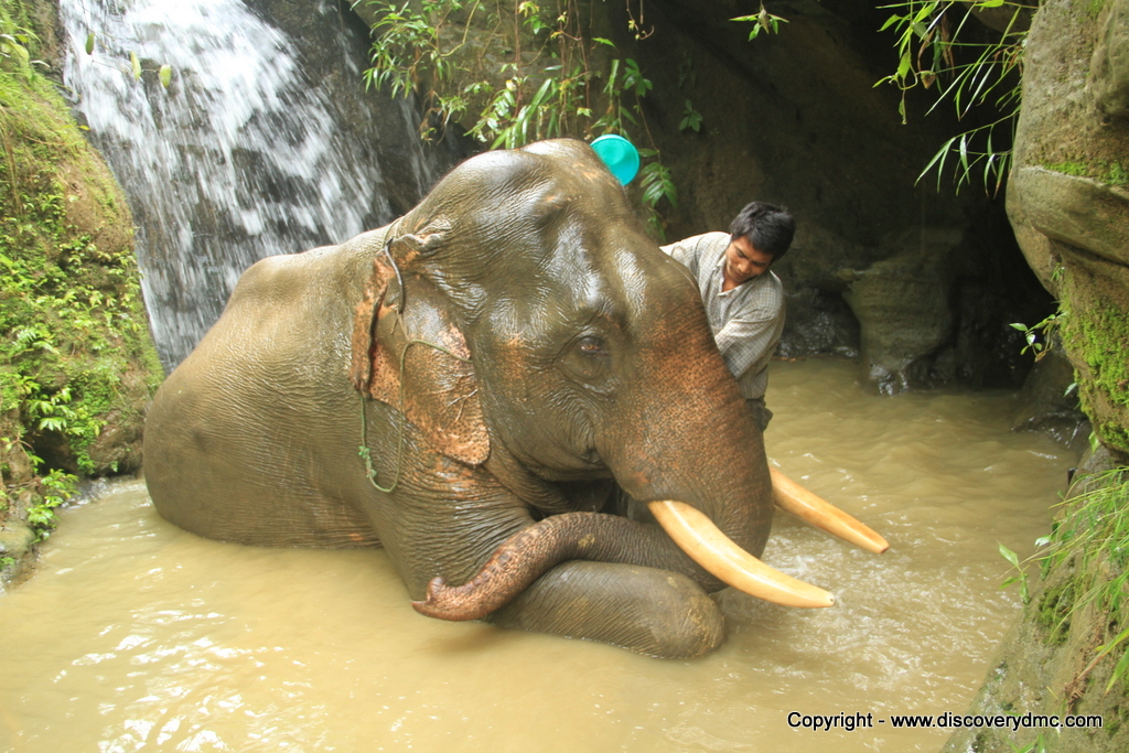 Elephant shower at Pho Kyar Camp
