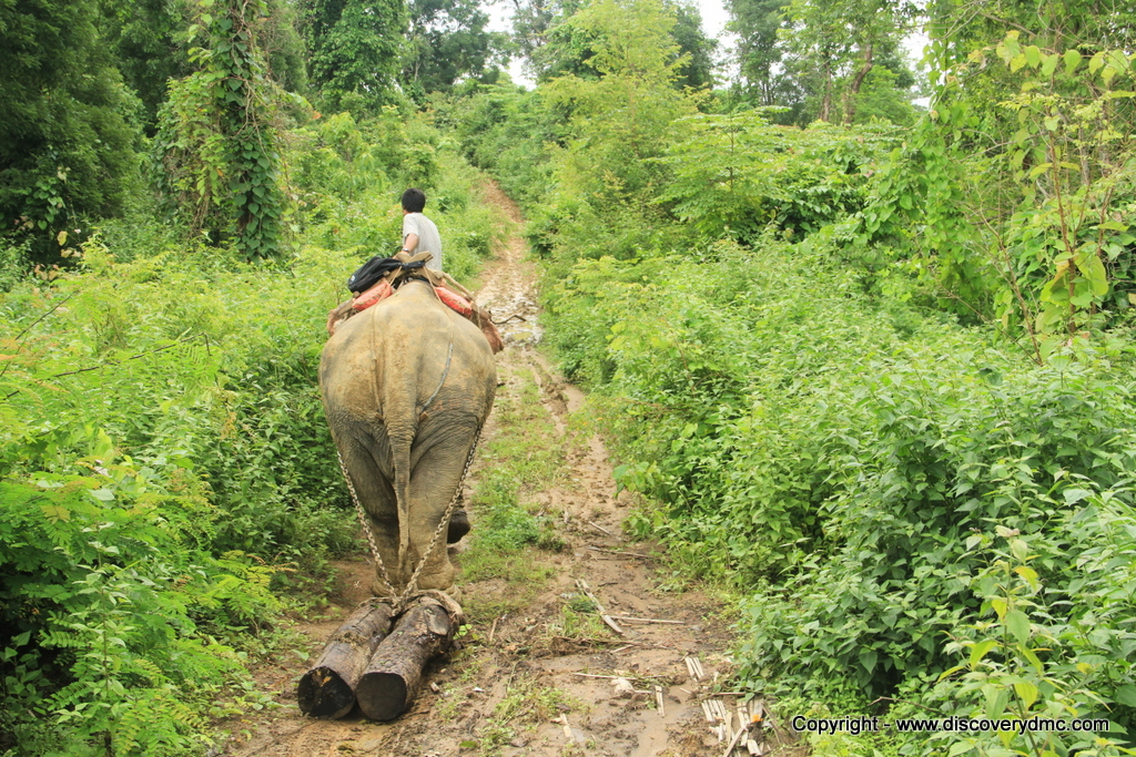 Elephant pulling logs at Pho Kyar Camp