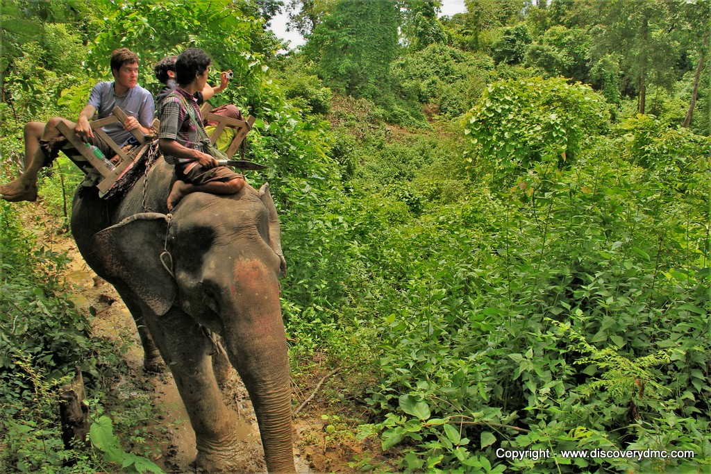 Elephant trek at Pho Kyar Camp